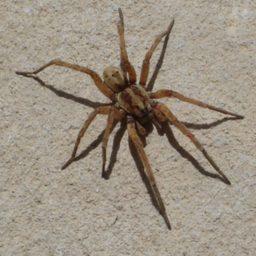 Уничтожение пауков в Нижней Тавде